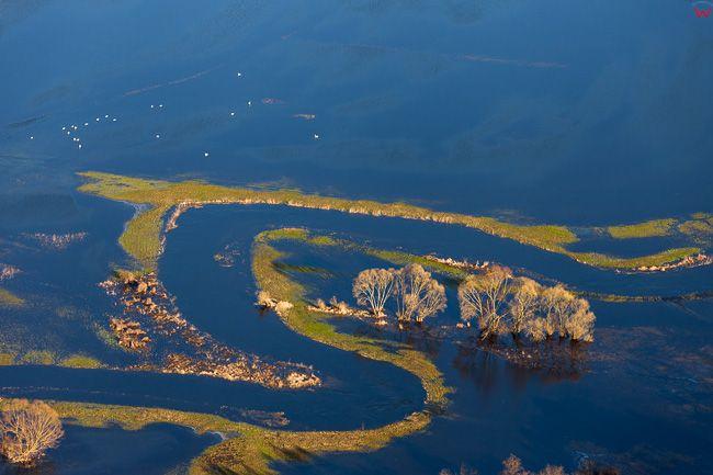 Dolina rzeki Drwecy. Wiosenne rozlewiska w okolicy Pokrzywnia. EU, PL, Kujawsko - Pomorskie. Lotnicze