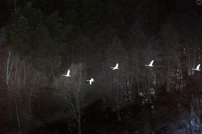 Brodnicki PK, wiosenne rozlewiska rzeki Drwecy, okolica Wilamowa. EU, PL, Kujawsko - Pomorskie. Lotnicze