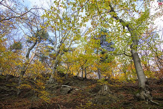 Park Krajobrazowy Gor Sowich, okolica Potoczek. EU, PL, Dolnoslaskie.