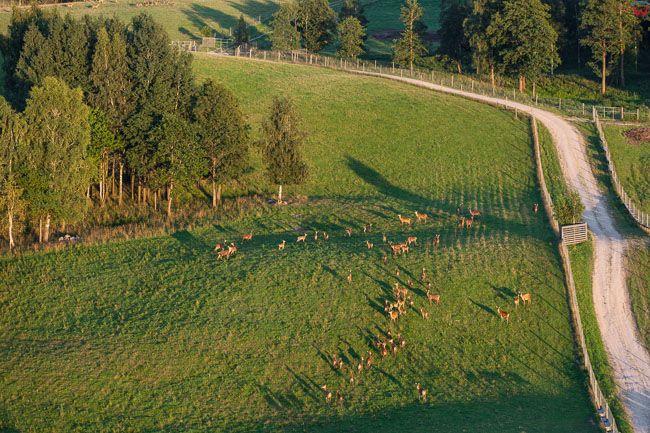 Rudzie, ferma jeleniowatych. EU, Pl, Warm-Maz. Lotnicze.