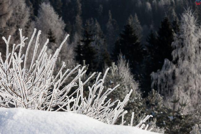 Gorce, gory w zimowej scenerii. EU, PL, malopolskie.