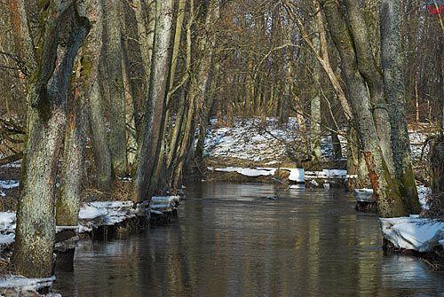 Rzeka Elma