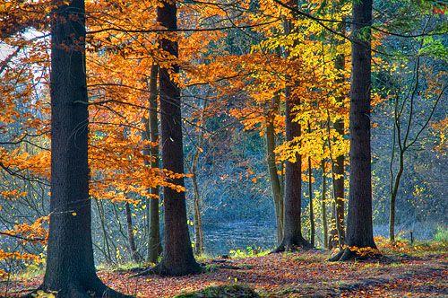 Warm-maz. Las jesienia.