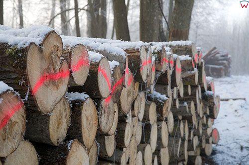 Sklad drewna w lesie