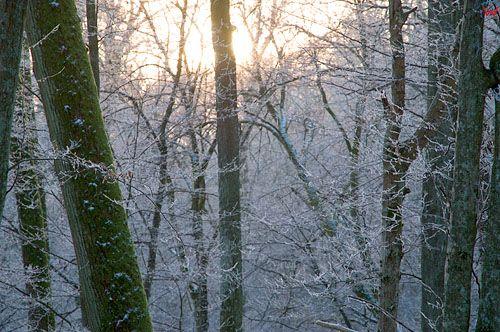 Warm-Maz, dolina rzeki Walszy.