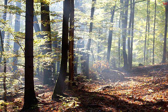 PL, warm-maz. Lasy bukowe w Jonkowie.
