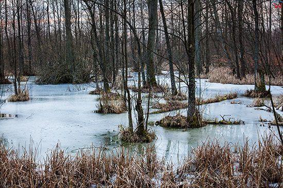 Las olsowy w okolicy Milomlyna. EU, PL, Warm-Maz.