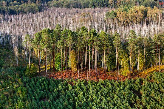 Santocko, lasy mieszane. EU, PL, Lubuskie. Lotnicze.