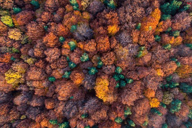 Park Krajobrazowy Dolinki Krakowskie. EU, Pl, Malopolska. Lotnicze.