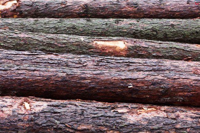 Okolica Biskupca, 21.02.2017 r. Na skutek zmian nowelizacji ustawy o ochronie przyrody i o lasach  na Warmii trwa intensywna wycinka drzew. EU, Pl, Warm-Maz.