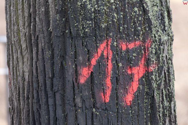 Okolica Biskupca, 21.02.2017 r. Na skutek zmian nowelizacji ustawy o ochronie przyrody i o lasach  na Warmii trwa intensywna wycinka drzew, n/z znaczone drzewa do wyciki. EU, Pl, Warm-Maz.
