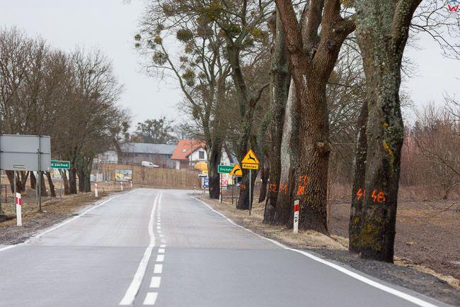 Okolica Szczytna, 21.02.2017 r. Na skutek zmian nowelizacji ustawy o ochronie przyrody i o lasach  na Mazurach trwa intensywna wycinka drzew, n/z znaczone drzewa do wycinki. EU, Pl, Warm-Maz.