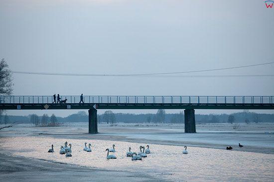 Pl, Podlaskie. Biebrzanski Park Narodowy. Most w Goniadzu.