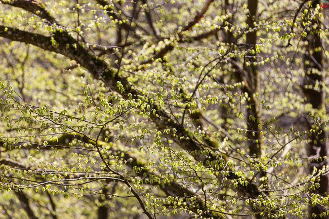 Las, wczesna wiosna 23.04.2017. Fot. Wojciech Wojcik