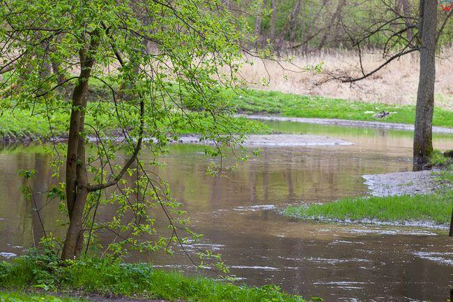 Lidzbark Warminski, 23.04.2017. Dolina Rzeki Symsarny.