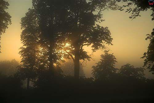 Poranek w Mazurskim Parku Krajobrazowym