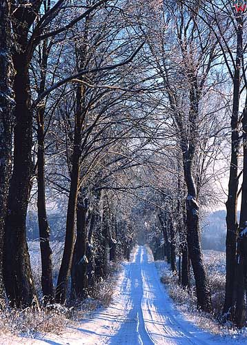 Zima okolica Blanek gm. LIdzbark Warmiński