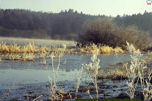 Rozlewiska wiosenne na wamii okolica Lidzbarka Warmińskiego