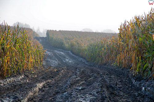 Warm-Maz. Pejzaz-uprawa kukurydzy.