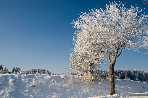 PL, Warm-Maz, zimowy pejzaz okolicy Stanczyki.