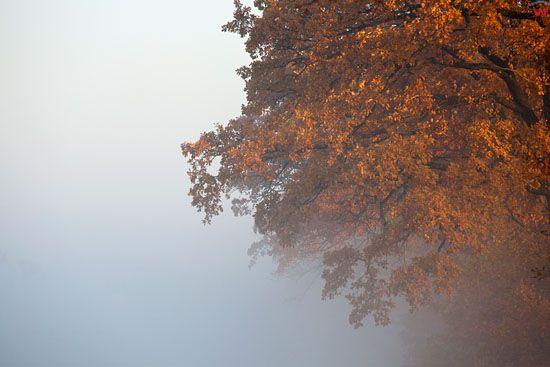 EU, Pl, warm - maz. Jesien na Warmii, okolica Satop.
