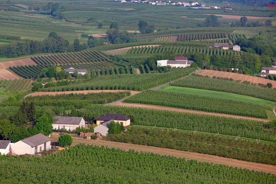 Ogrodnictwo w okolicy Sandomierza. EU, Pl, Swietokrzyskie. LOTNICZE.