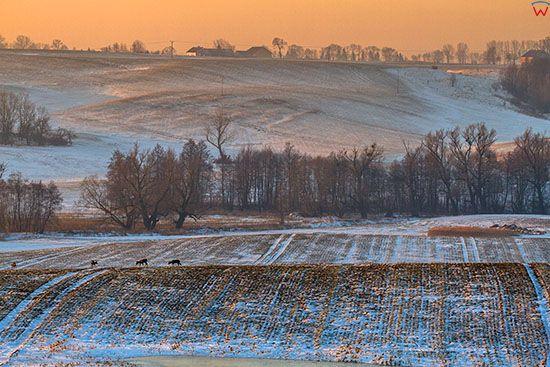 Zimowy pejzaz okolicy Reszla. EU, PL, Warm-Maz.