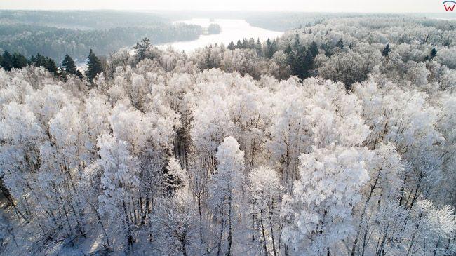 Zima, oszronione drzewa w okolicy Elblaga. EU, PL, Warm-maz. Lotnicze.