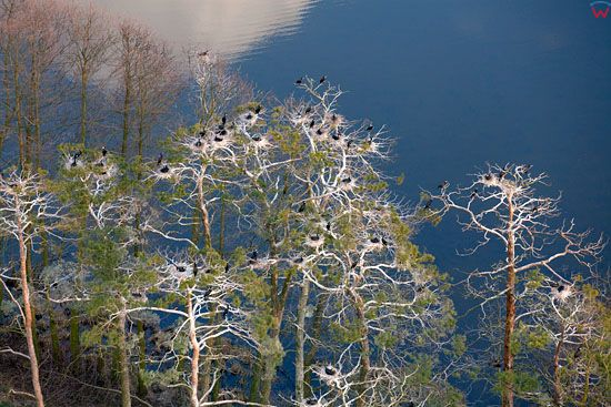 Kolonia kormoranow na jeziorze Lasmiady. Lotnicze, EU, Pl, warm-maz.