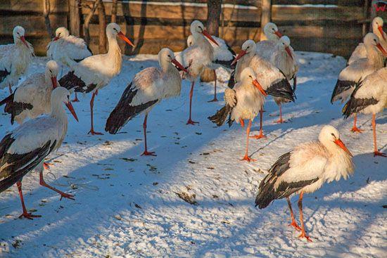 Bukwald, Osrodek Rehabilitacji Ptakow Dzikich. EU, Pl, Warm-Maz.