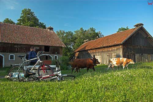 Bociania wieś w Żywkowie