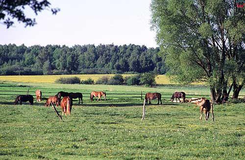 Pastwisko okolica Bartoszyc