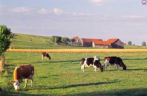 Pejzaż w okolicy Lidzbarka Warmińskiego