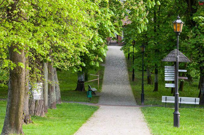 Naleczow, aleje w Parku Zdrojowym. EU, PL, Lubelskie.