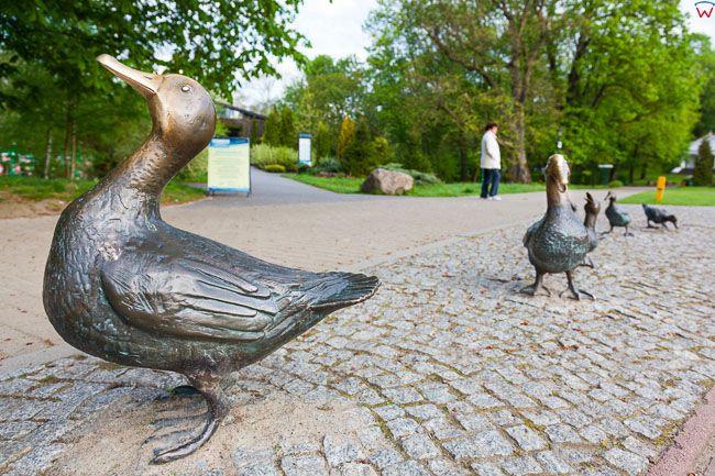 Naleczow, Pomnik Kaczek w Parku Zdrojowym. EU, PL, Lubelskie.