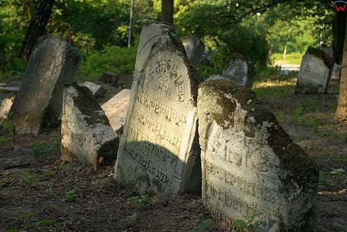 Macwy na cmentarzu żydowskim w Szczebrzeszynie