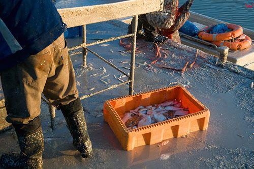 Warm-Maz. Frombork, zaladunek ryby w porcie rybackim