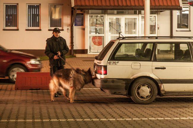 Gronowo, przejscie graniczne wlaczone do Malego Ruchu Granicznego. N/z pies do wyszukiwania ukrytych papierosow. EU, Pl, warm-maz.