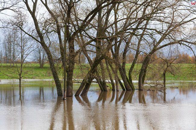 Rygarby, pow, bartoszycki. Jesienne opady deszczu spowodowaly lokalne podtopienia poprzez wystapienie z koryta rz. Lyna.. EU, PL, warm-maz