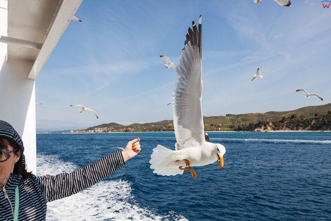 Grecja, Polwysep Chalcydycki - Athos. Turysci karmiacy mewy. EU, PL,