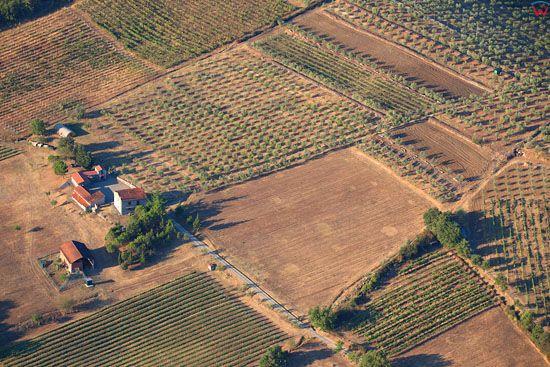 Sady oliwne w okolicy Ponticino. EU, Italia, Toskania. LOTNICZE.