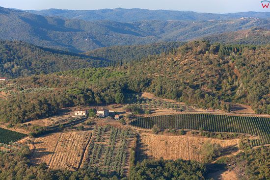 Sady oliwne w okolicy Pergine Valdarno. EU, Italia, Toskania. LOTNICZE.