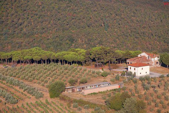 Apeniny, sad oliwny w okolicy San Pancrazio. EU, Italia, Toskania. LOTNICZE.