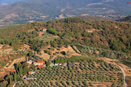 Sad oliwny w okolicy San Pancrazio. EU, Italia, Toskania. LOTNICZE.